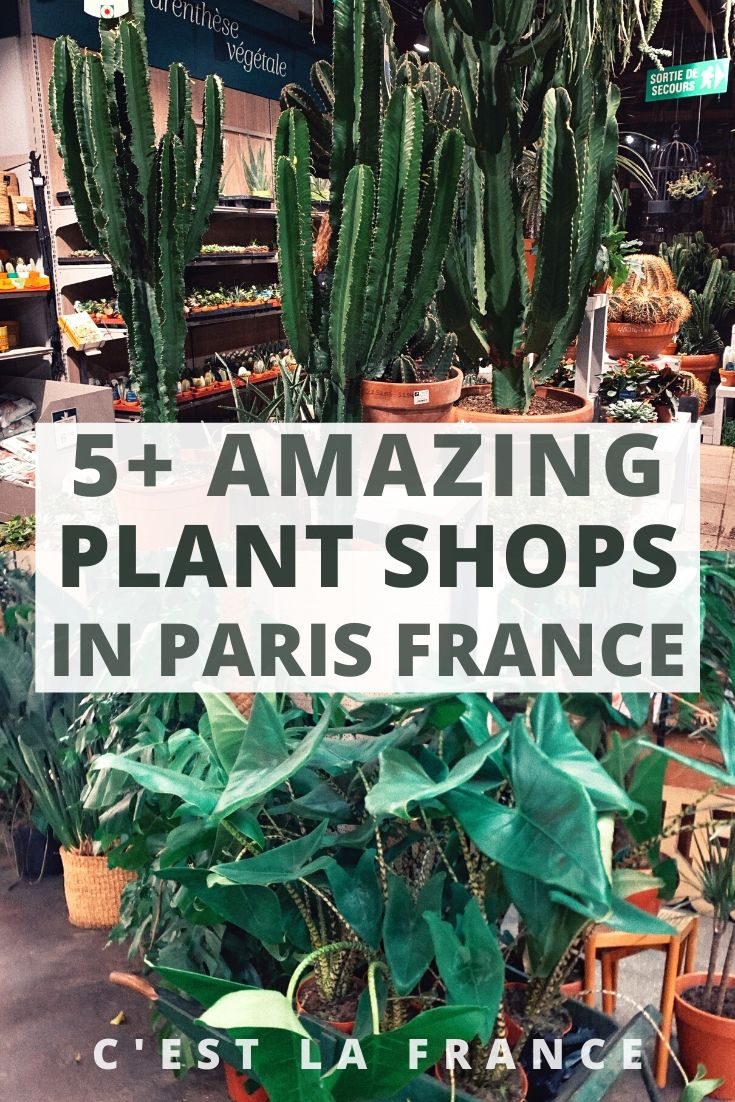 Where to Buy House Plants in Paris (Best Plant Shops you'll love in the Île de France region of France)