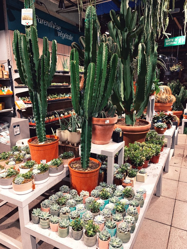 Where to Buy House Plants in Paris (Best Plant Shops)