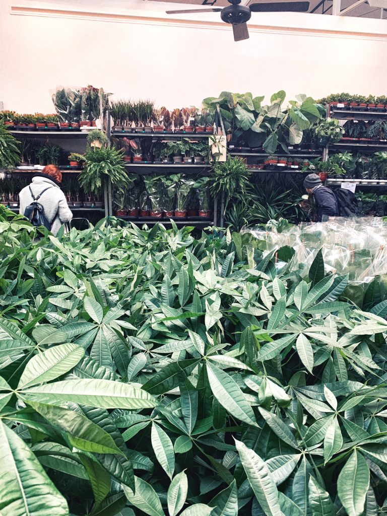 Where to Buy House Plants in Paris (Best Plant Shops) in France